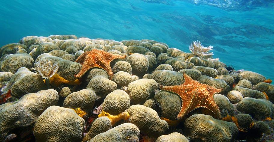 Aruba Strandferien Tauchen Korallenriff Unterwasserwelt
