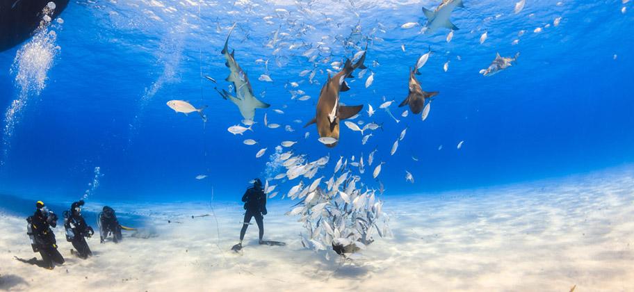 Bonaire Tauchen Haie Schweizer Reisebüro