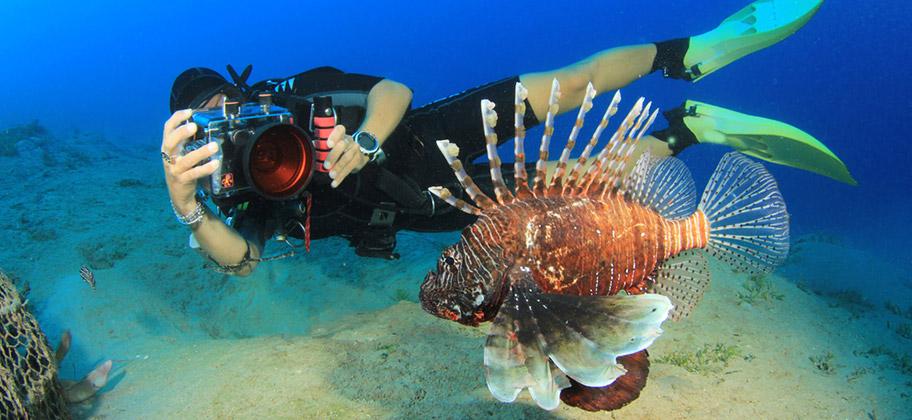 Curacao Tauchen Korallen Riff Feuerfisch