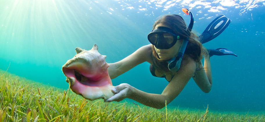 Curacao tauchen schnorcheln korallen riff schweiz