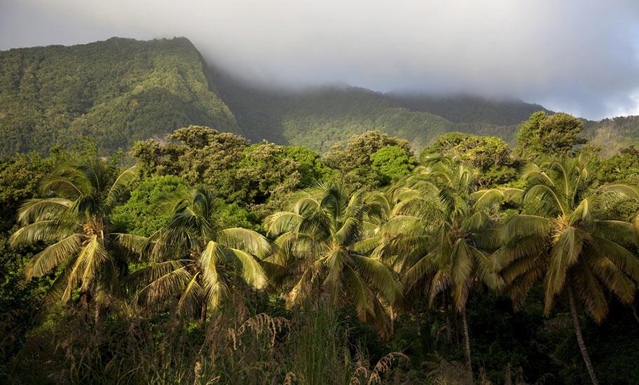 Natur Dominica Naturreisen Regenwald Nebel