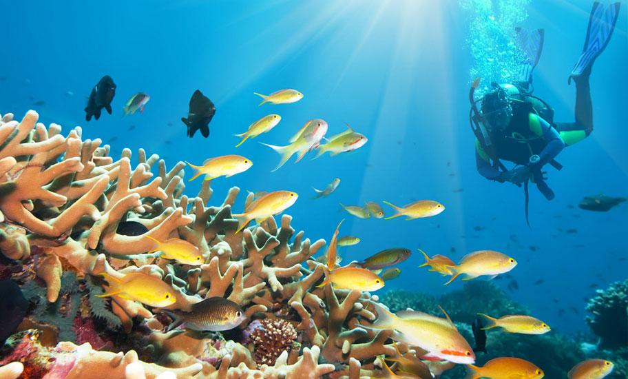 Karibik Tauchreise günstig buchen