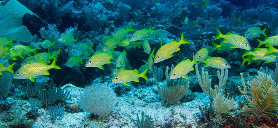 Tobago Korallen Riff Fisch Schwarm