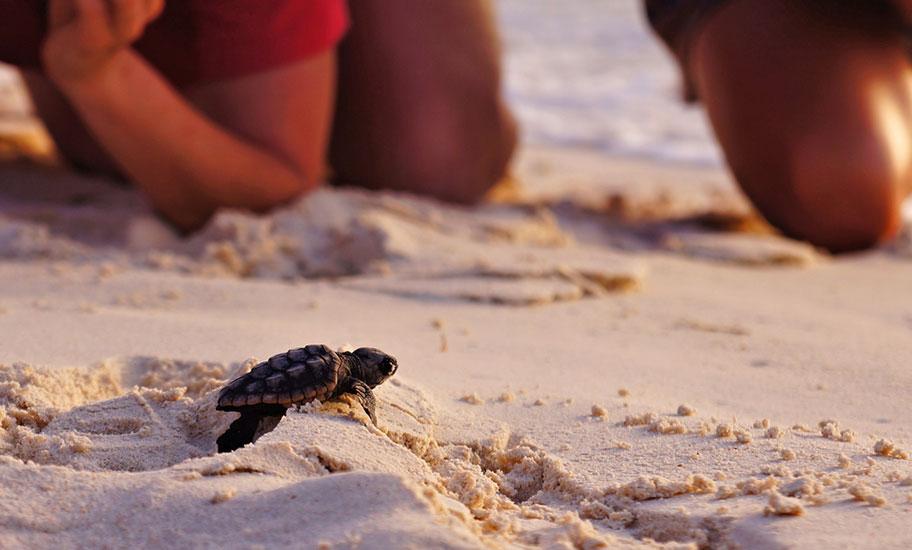 Kuba Familienausflüge Schildkrötenfarm