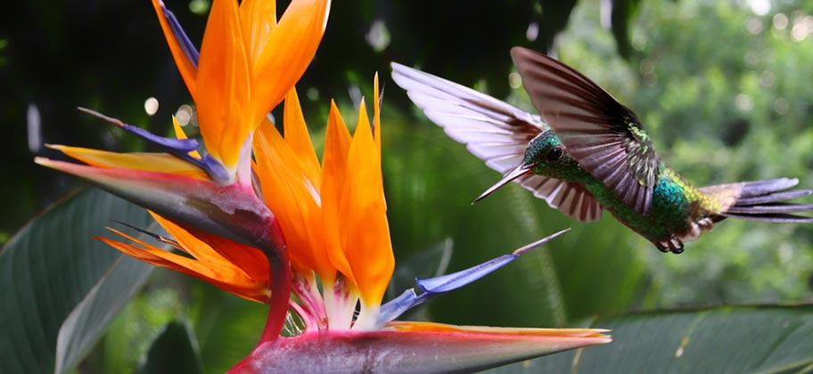 Martinique Wandern Kolibri Natur Blumen