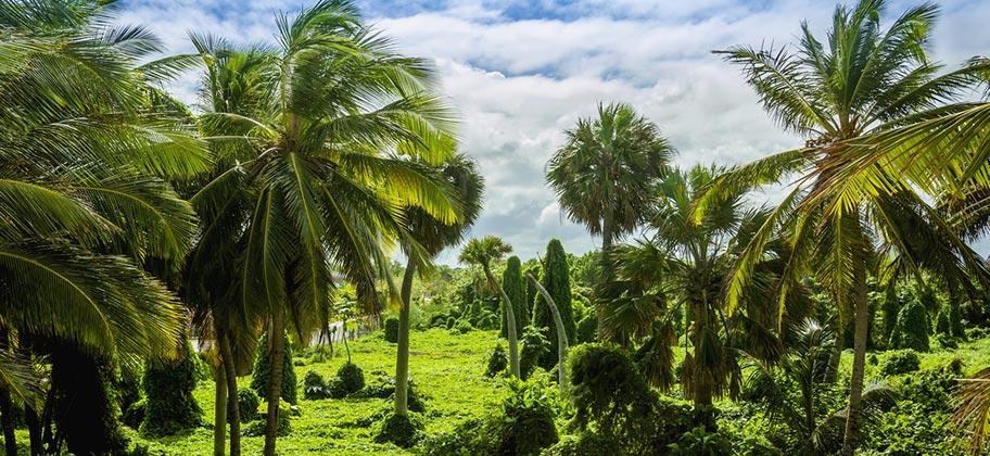 Martinique Natur Reisen Wandern Schweiz
