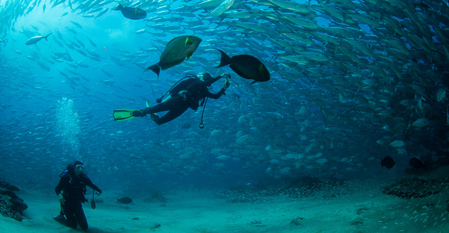 Tobago Trinidad Riff Korallen Tauchen