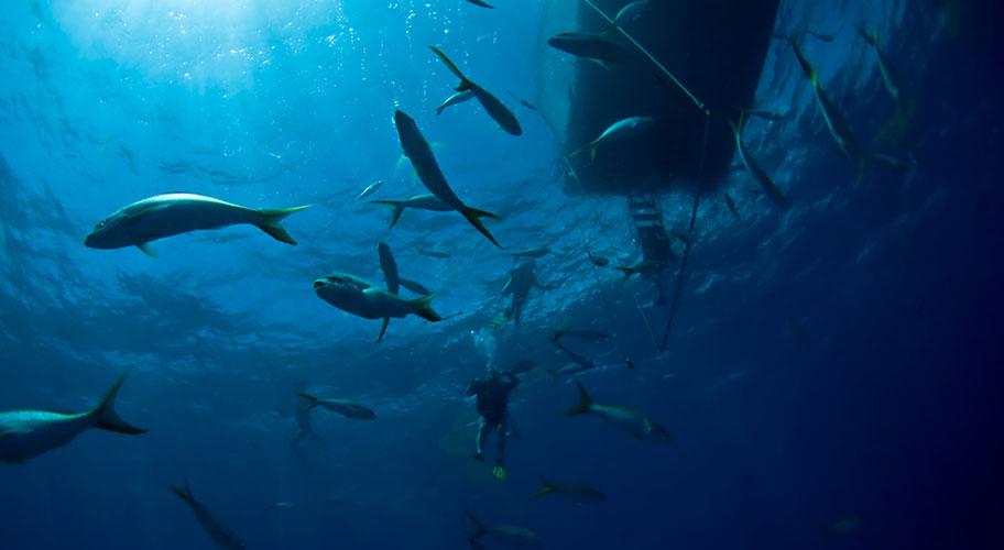 Turks Caicos Strandferien Unterwasserwelt tauchen