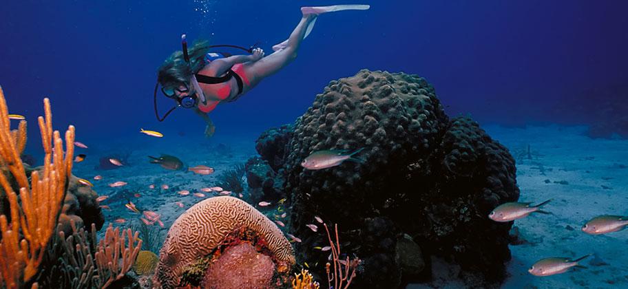 Virgin Islands Strandferien Tauchen Schnorcheln Korallen