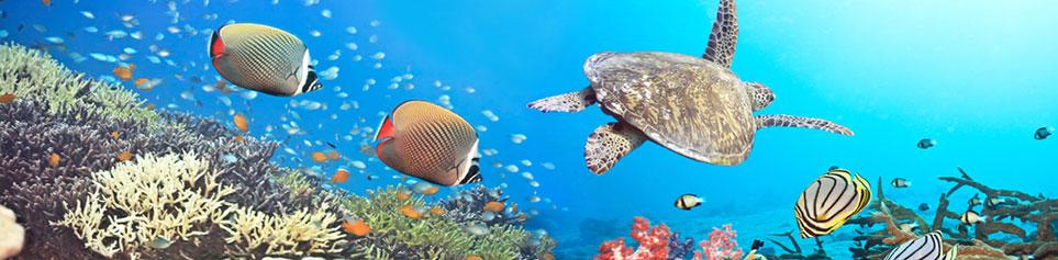 Curacao Tauchen Schnorcheln