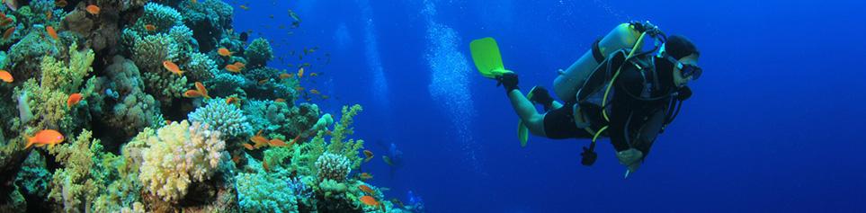 Karibik Tauchen