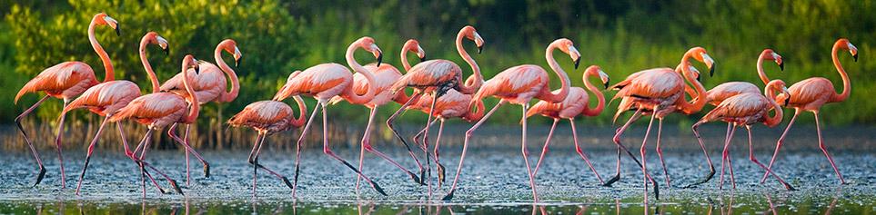 Kuba Naturreisen